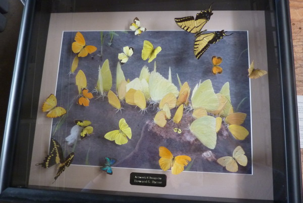 Real butterflies mounted over an original portrait
